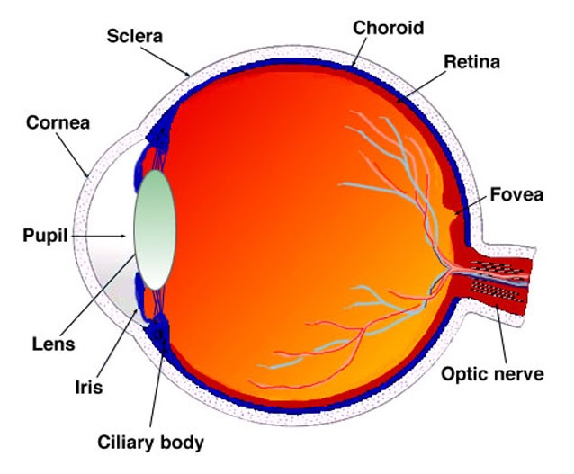 Back To Basics Retinal Detachment Sydney Ophthalmic Specialists