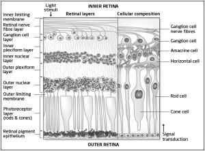 retina-2