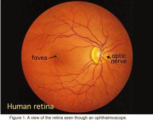 retina-photo